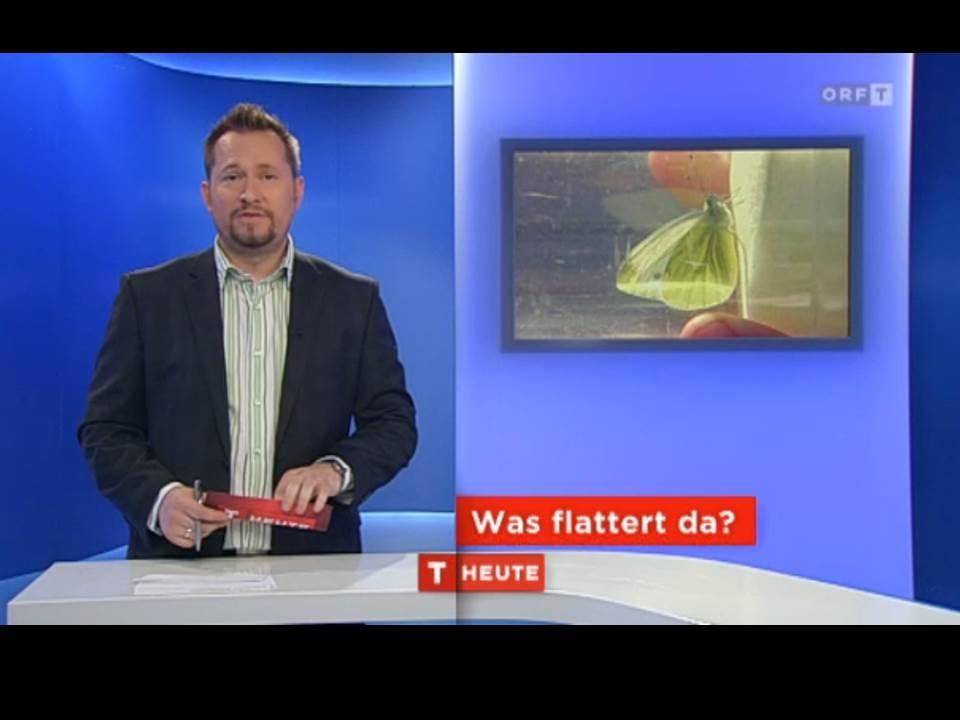 Schmetterlinge Begeistern Auch Den ORF