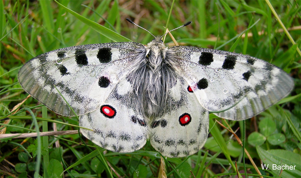 Schmetterlingserhebung Der VS Steinach