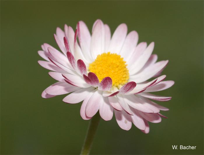 November-Blüten