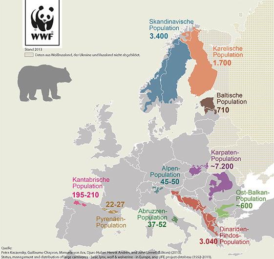 Bär Europa 2014 WWF