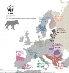 Wolf Europa 2013_ WWF