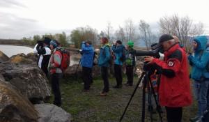 Vogel-Exkursion Rheindelta - mit Albin