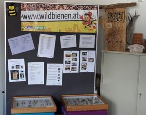 Wildbienen-Seminar LehrerInnen