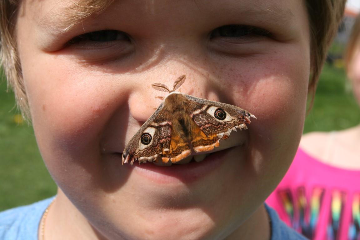Freiwillige Schmetterlingsbeobachter Für Das Projekt Viel-Falter Gesucht!