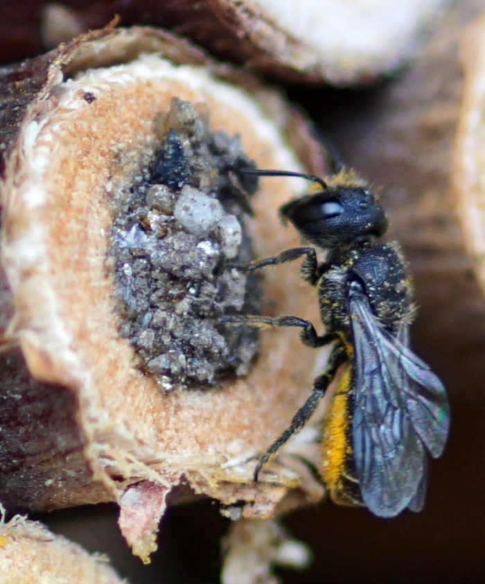 Besuch Von Den Wildbienen-Freunden Von VS Und ASO Steinach