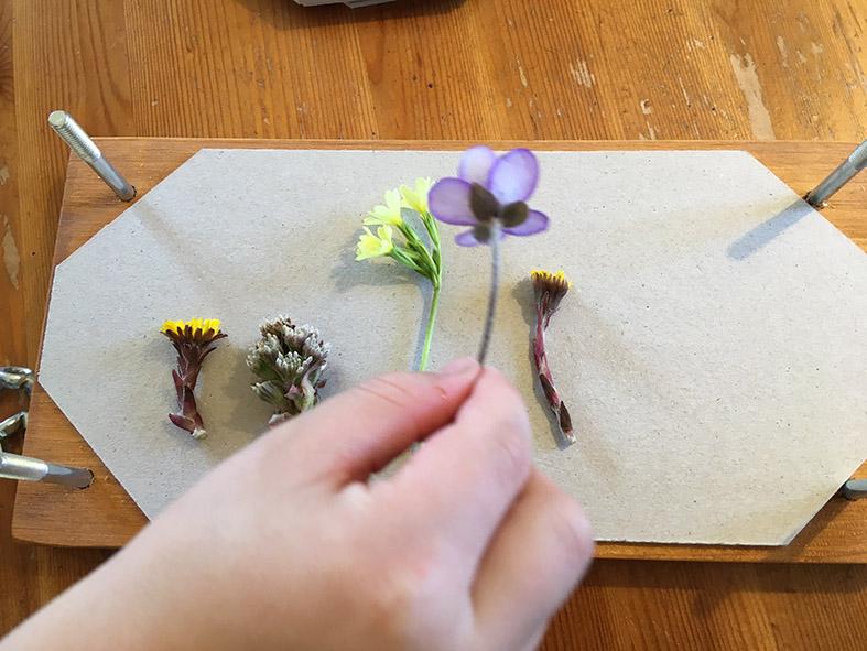 Unser Frühblüher-Herbarium