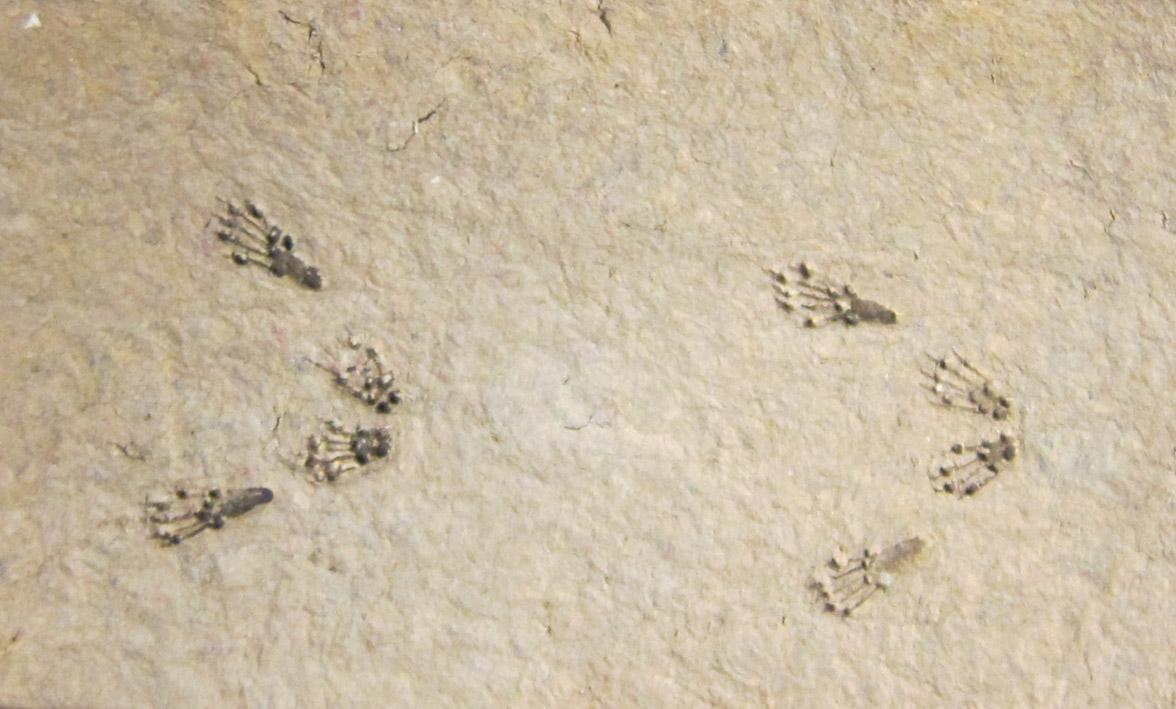 Eichhörnchen Spur