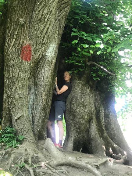 Der Herzchenbaum
