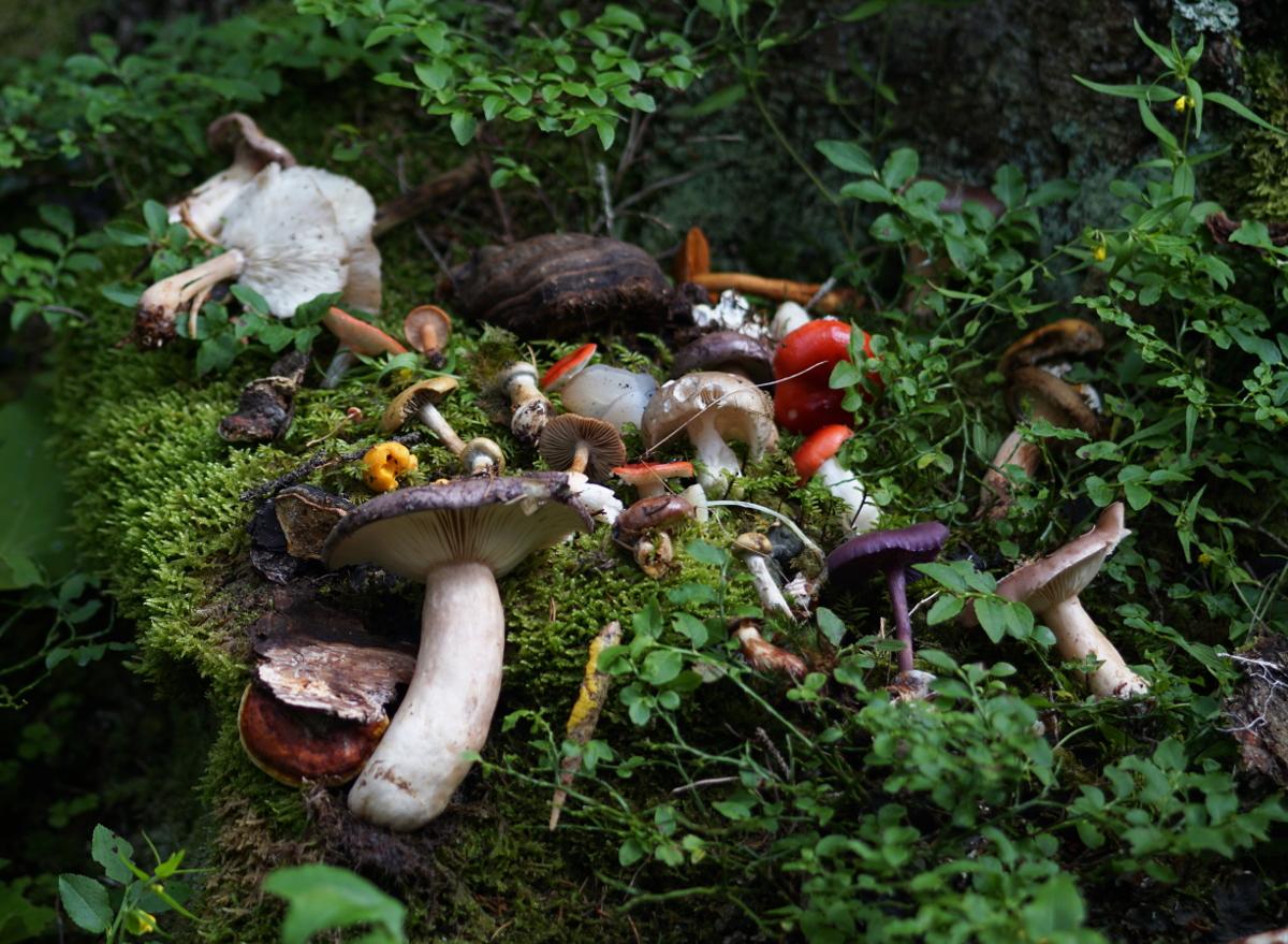 """Naturpark Zillertal – 23. Bis 26. Juli 2020 – """"Wald"""""""