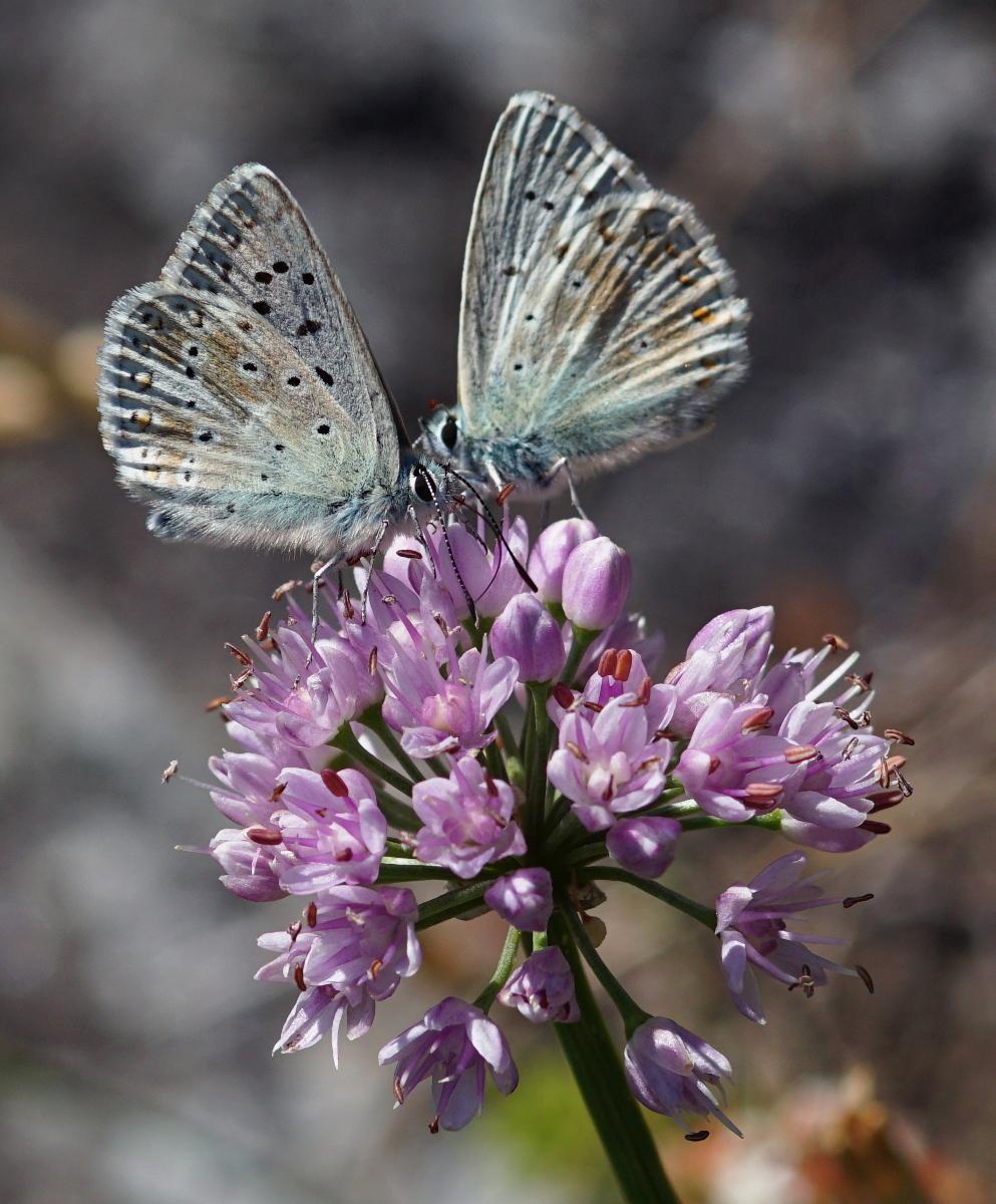 """Naturpark Kaunergrat – 6. Bis 9. August 2020 – """"Wiese"""""""
