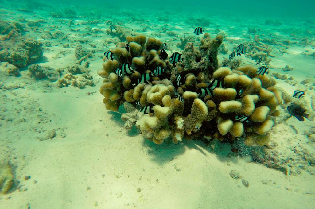 Natopia Ohrwurm – Ökosystem Meer