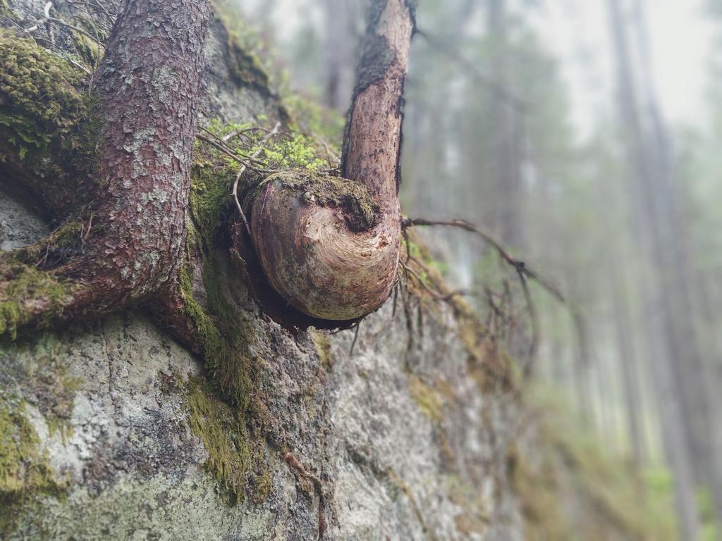 Wald Von A(stholz) Bis Z(emmgrund) – Tiroler Naturführerkurs 2021 Im Naturpark Zillertaler Alpen